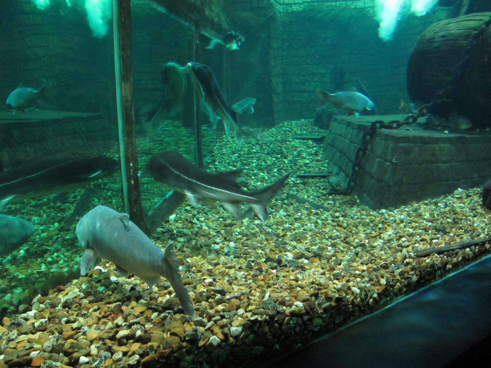 grand aquarium de touraine view